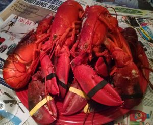 Lobsters for Lobster Fest